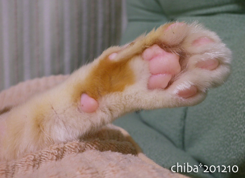 chiba12-10-26.jpg