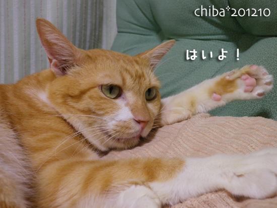 chiba12-10-27.jpg