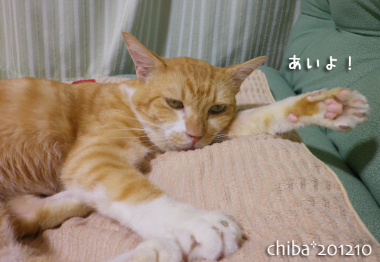 chiba12-10-28.jpg