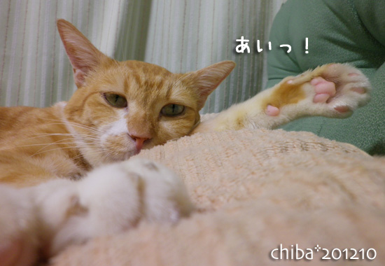 chiba12-10-29.jpg