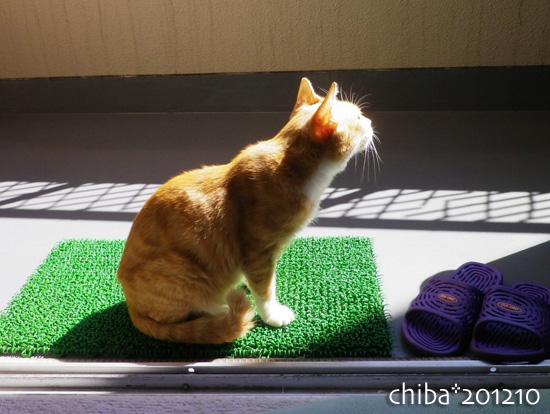 chiba12-10-44.jpg