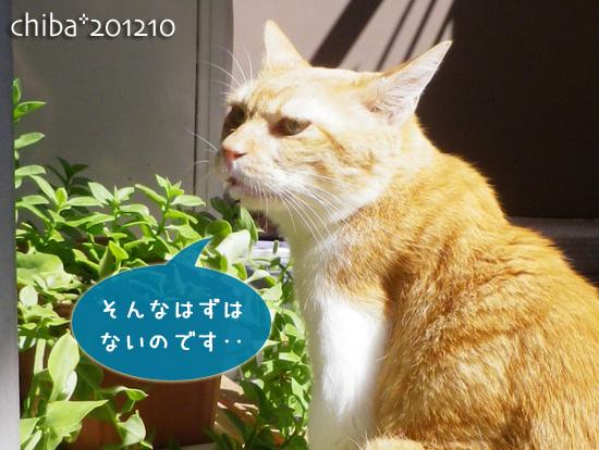 chiba12-10-47.jpg