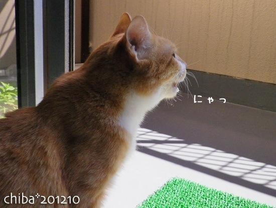 chiba12-10-71.jpg
