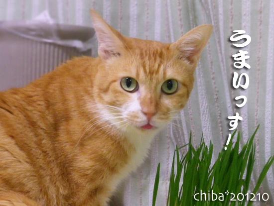chiba12-11-04.jpg