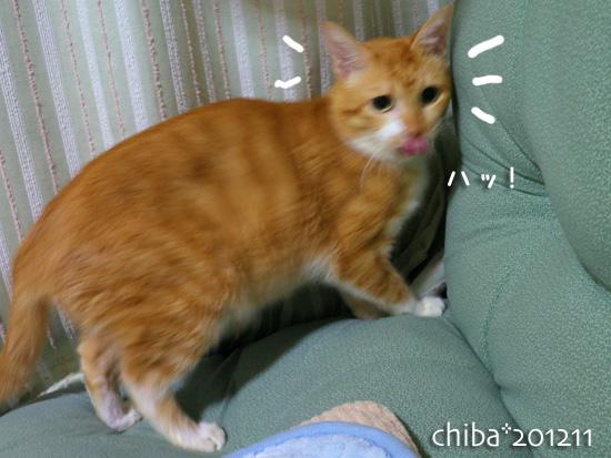 chiba12-11-108.jpg