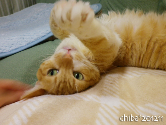 chiba12-11-62.jpg
