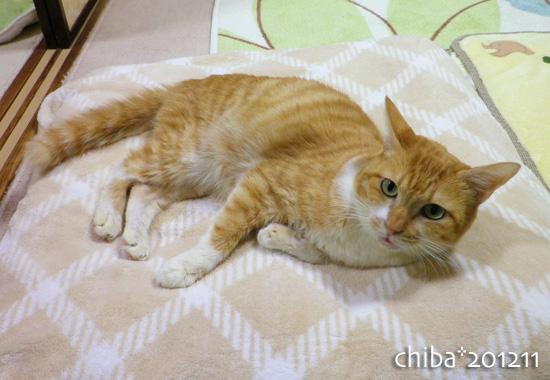 chiba12-11-86.jpg