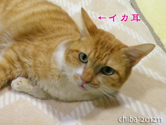 chiba12-11-87.jpg