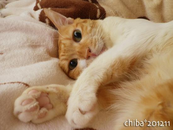 chiba12-11-95.jpg