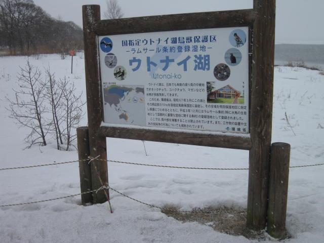 ウトナイ湖2012の1