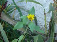 PICT0009_20121130172511.jpg