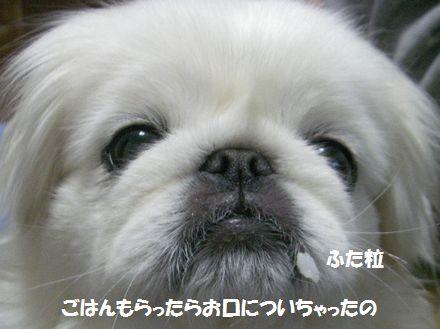 IMGP1901_3.jpg