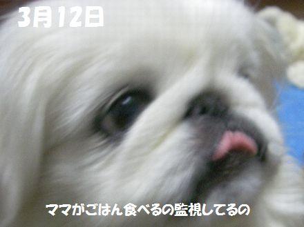 IMGP1905_3.jpg