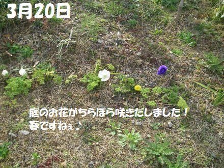 IMGP2574_3.jpg