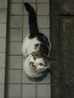 招き猫? 017