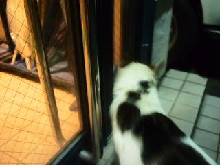 招き猫? 013