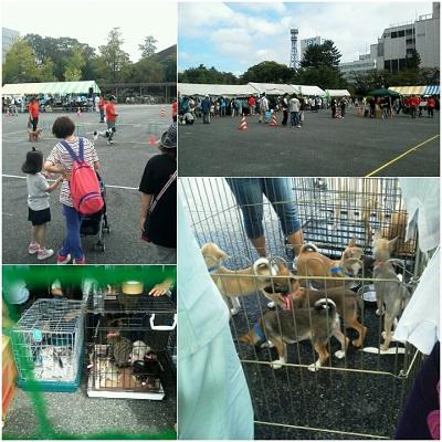 動物愛護フェスティバル25