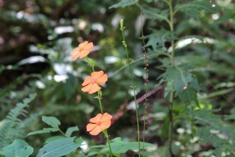 20120825-fushigurosennou.jpg
