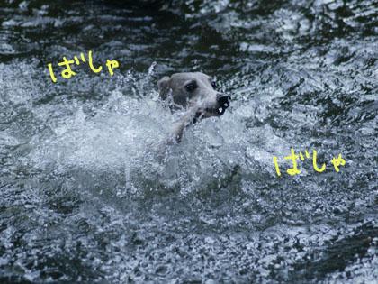 2012073111512913a.jpg