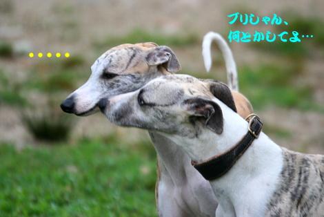 IMG_8783_20120703220641.jpg