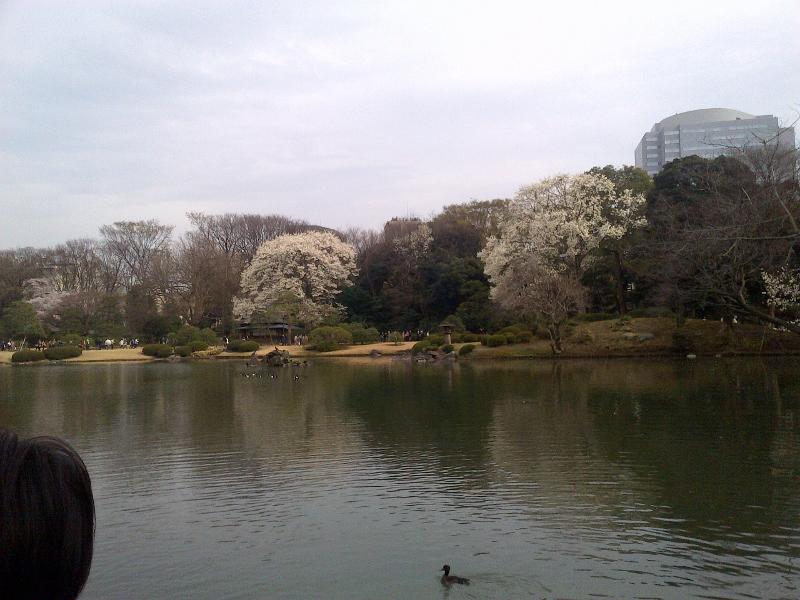 ryokugi6 (800x600)