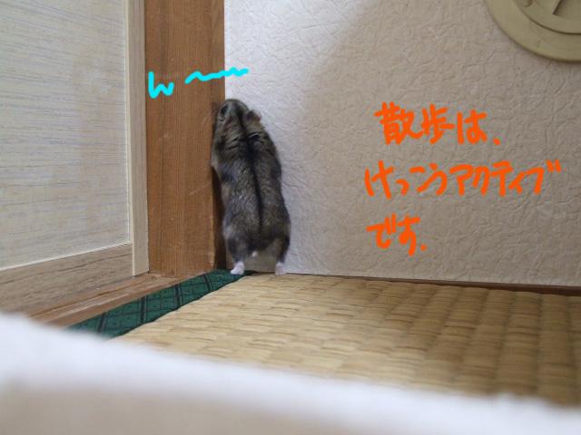 DSCF1210105b2582.jpg