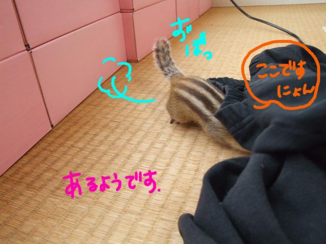 DSCF121012c3003.jpg