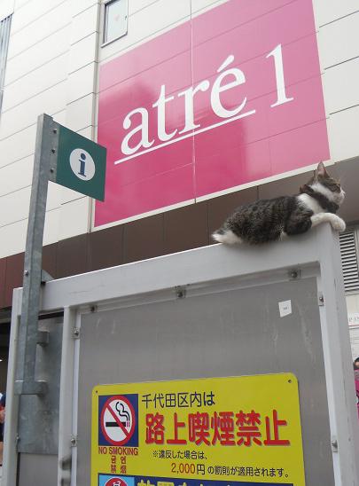アトレ前に謎のネコ
