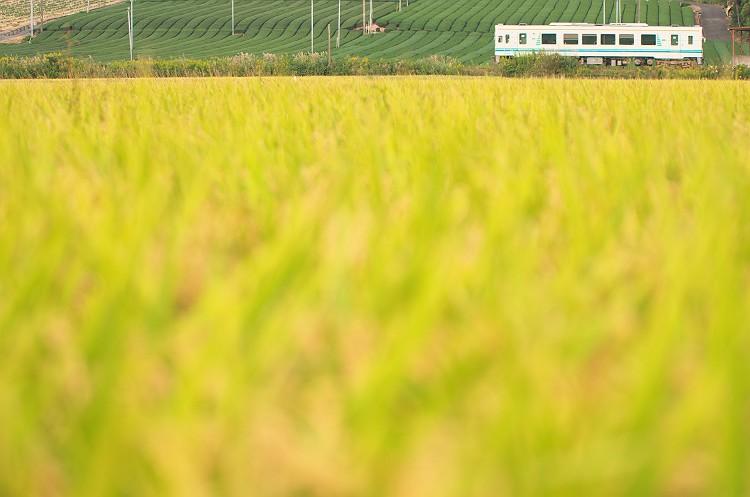 天竜浜名湖鉄道の秋