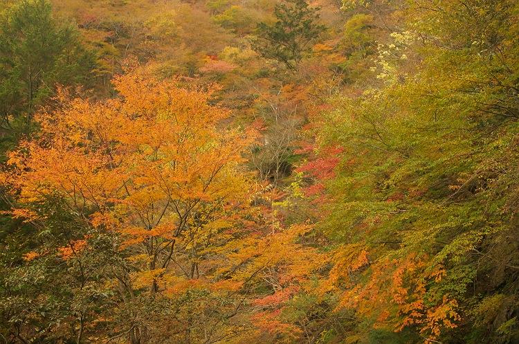 大札山の紅葉 3