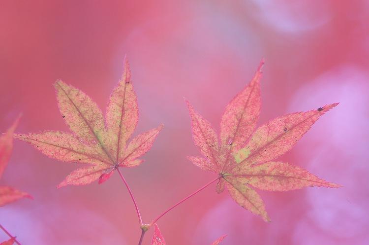 見上げれば、秋