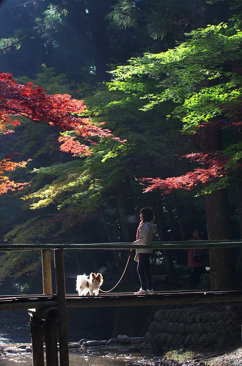 小國神社の秋