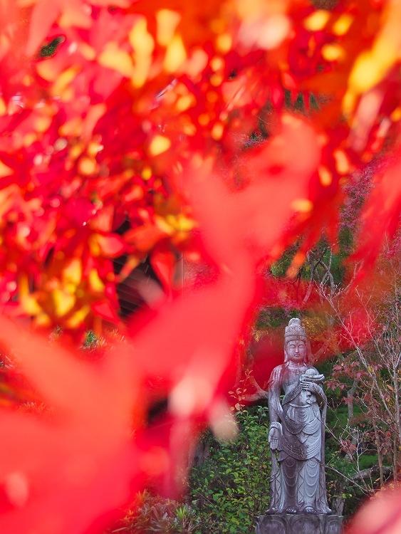 秋深まる 2