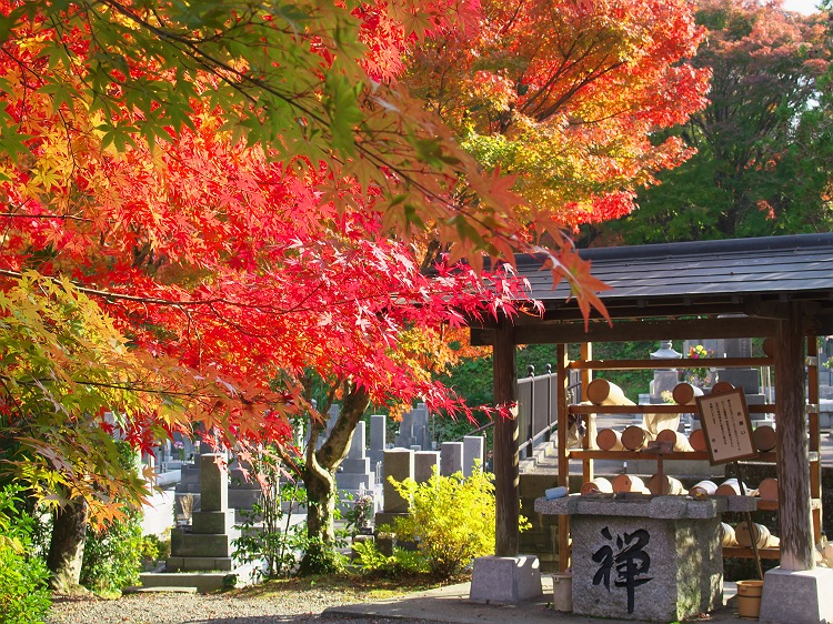 秋深まる 3