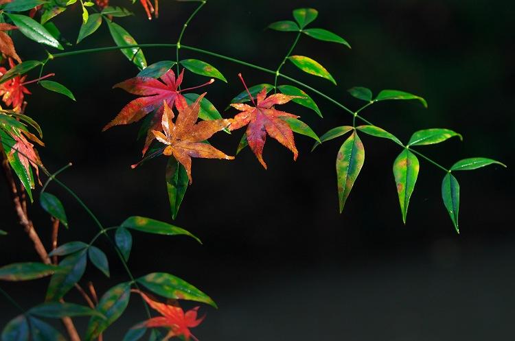 過ぎ去りし秋