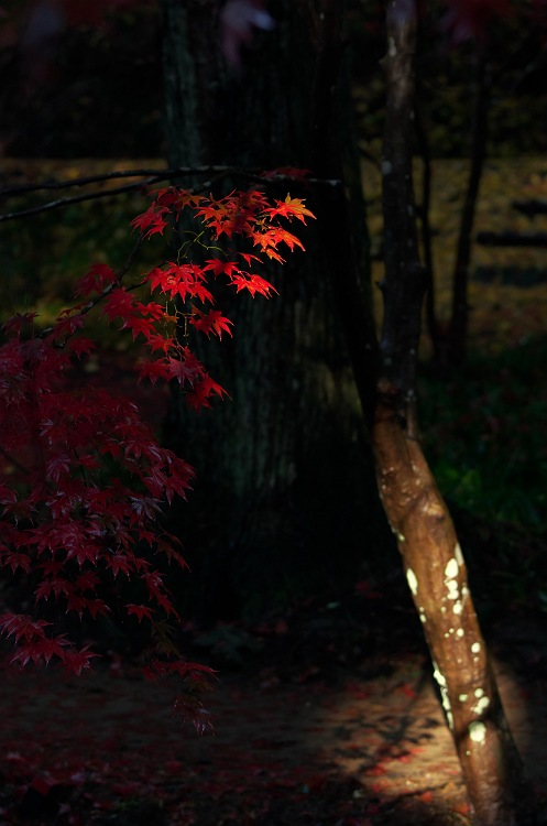 過ぎ去りし秋 2