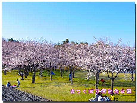 blog20120410e.jpg