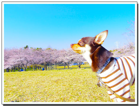 blog20120410g.jpg