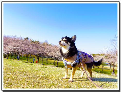 blog20120410h.jpg