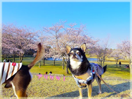 blog20120416i.jpg