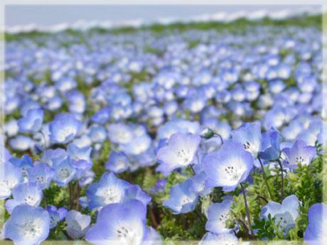 blog20120520e.jpg