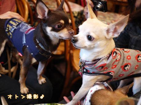 blog20121118g.jpg