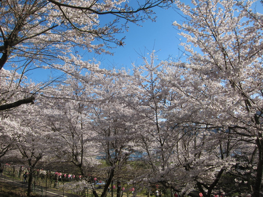 2012花見_015