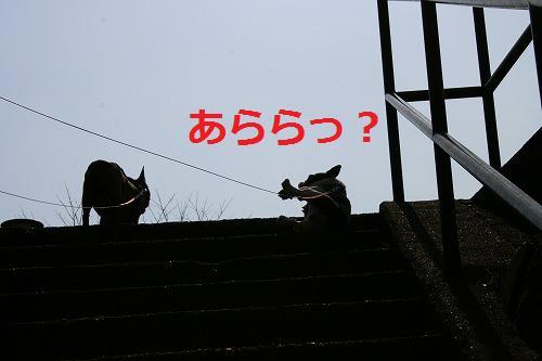 s-IMG_4088.jpg