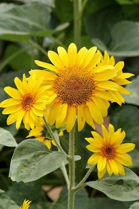 此のお花達はとても可愛らしいお花でした