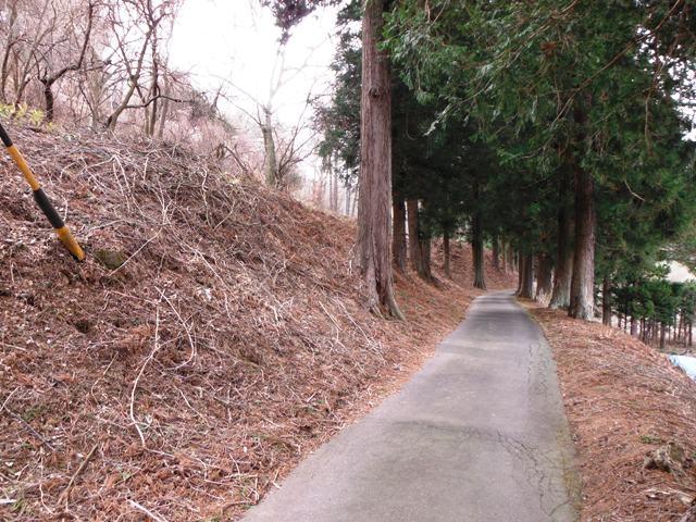 入沢城 (156)