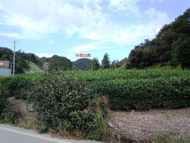小笠山砦 (31)