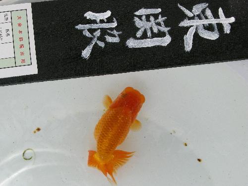 A  東関脇