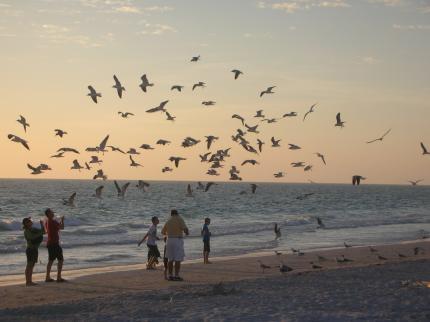 FLの浜辺