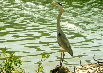 golf場の鳥